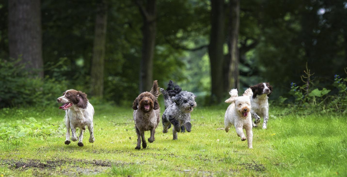 Fem olika hundar